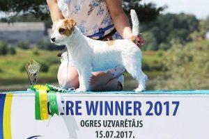 http://terrier.lv/wp-content/uploads/2021/02/Tigra-ingrus-300x200.jpg